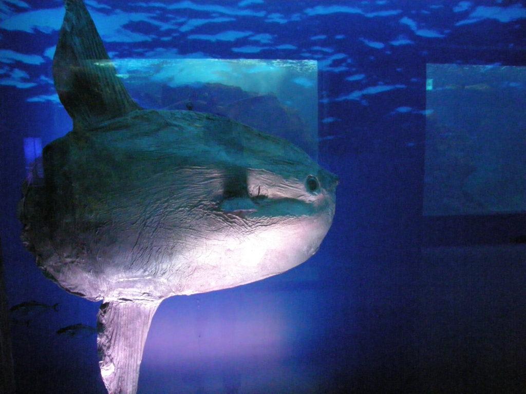 Creataquarium Ryba głowa