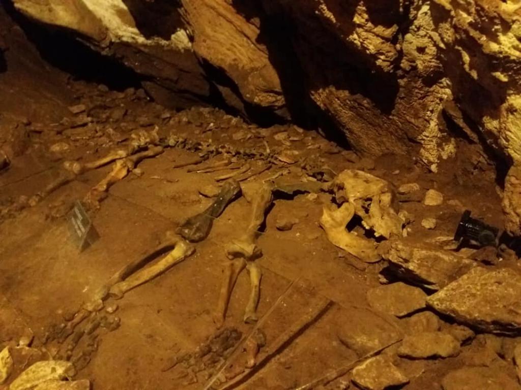 szkielet niedźwiedzia jaskinia niedźwiedzia w kletnie