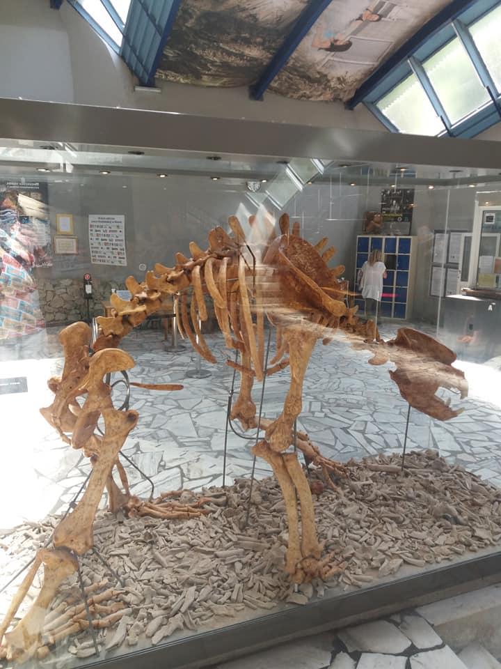 szkielet niedźwiedzia w jaskini niedźwiedzia w kletnie