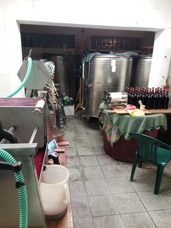 Zielona Góra winnica Julia