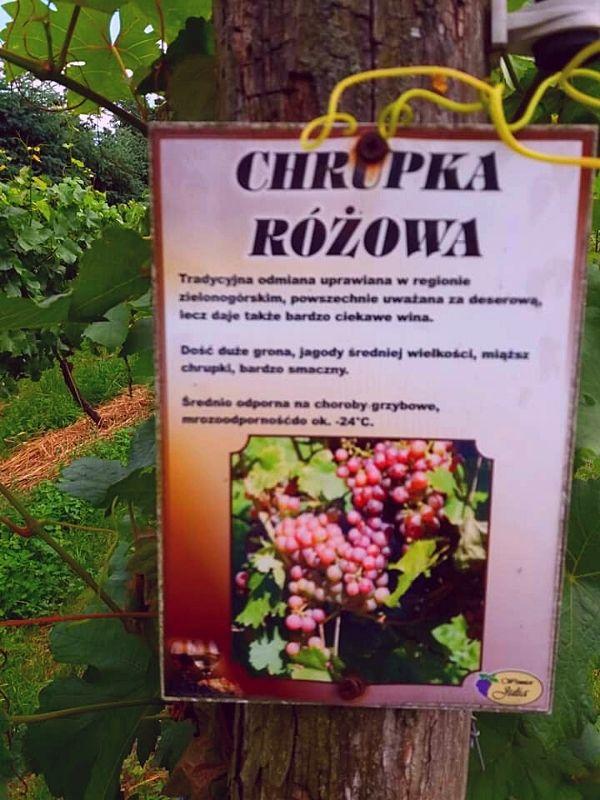 Lubuskie odmiany winorośli