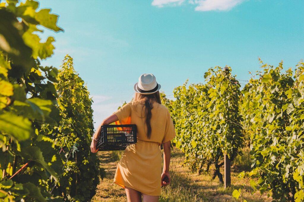 lubuskie winnice