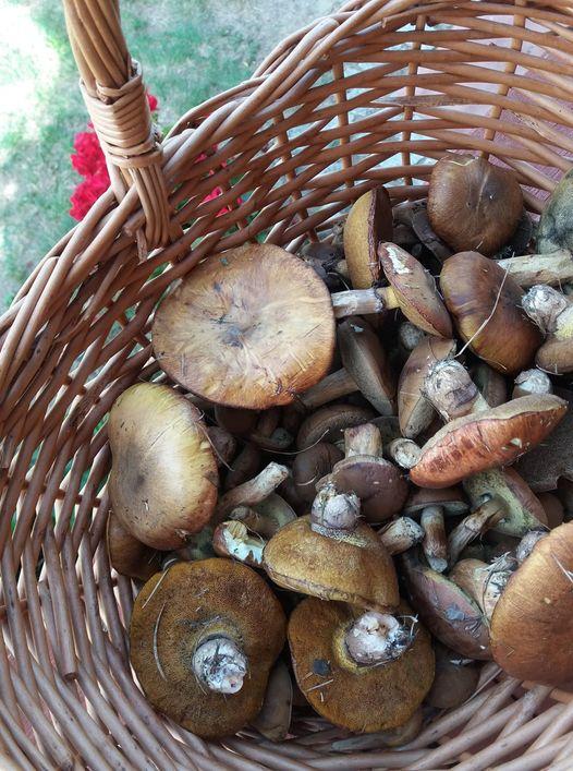 Zbieranie grzybów to świetna metoda na odstresowanie się i relaks