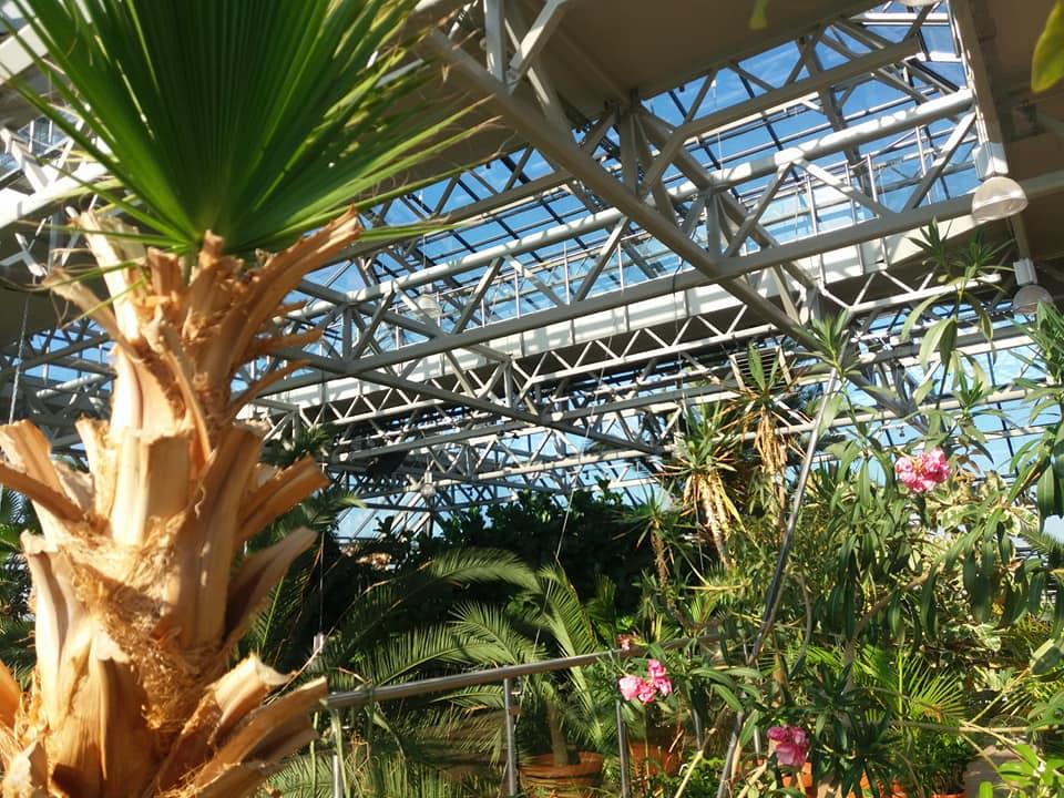 Bujna roślinność w Zielonogórskiej palmiarni