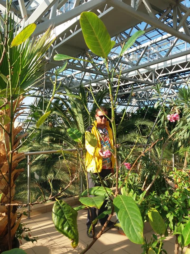 Bujna roślinność w Zielonogórskiej palmiarnii
